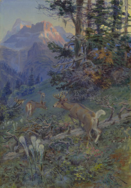 Deer in Forest (White Tailed Deer)