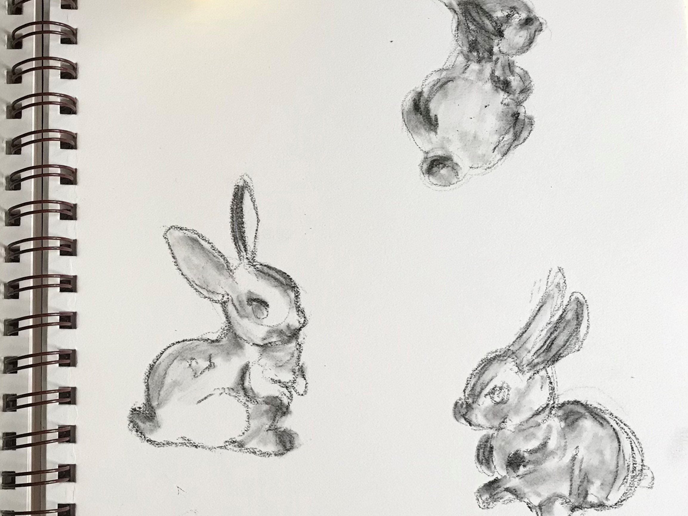 Photo of a drawing of 3 bunnies in charcoal